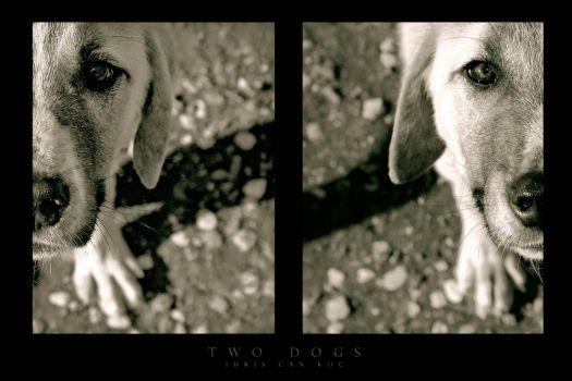 . : Two Dogs : . by kharax