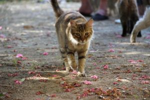 chat des rues by Flore-stock