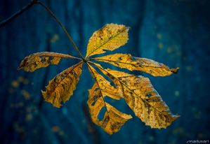 Autumn Leaves V by Mariusart