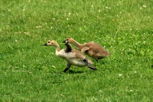 Coming Mom! by olearysfunphotos