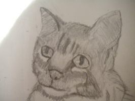 cat head by writerwithoutapencil