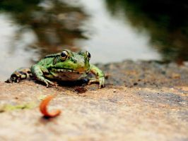 Froggy Friend by deliquescedesign