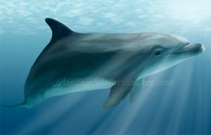 Dolphin by Aisling88