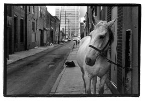 carriage horse by sothenkylesays