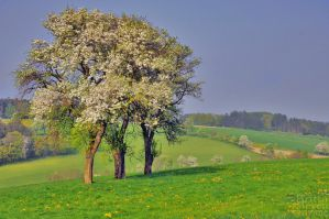 Austria in springtime by brijome