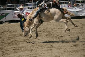 rodeo 6 by xbr0kendevotion