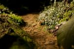 Tiny river by MultiMan