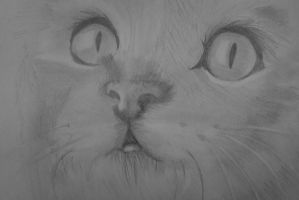 Kitty :) by xOliver