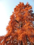autum tree by exit-humanity