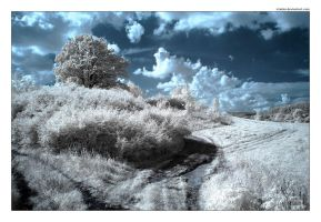 Playing with IR by iciatko