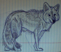 coyote sketch by StardogChampion94