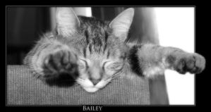 Bailey by sooperman