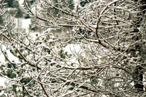 twigs of winter by Lucy777