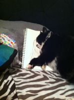 Ok, Skiddles protect my drawing book by StitchedSmile1