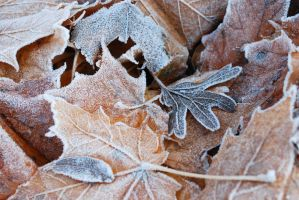 Frosty leaves by MooniQ