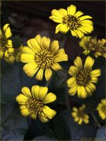 Leopard plant5186 by osam-devet