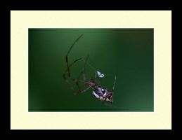 Spider Photo 9 by blookz