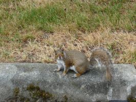 Squirrel Stalker by Draconian-Doxology