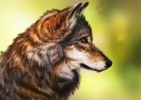 Wolf Study by Arkarti