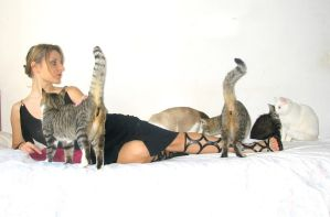 Cats by KasStock