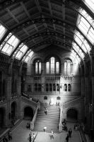 Museum of Natural History VII by Daniiwitch