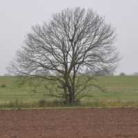 Solitary tree in a field in autumn by NicolasZerling