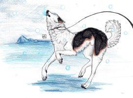 .:Howl in the Snow:. by KGrumpyPsycho