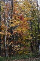 foret d automne by MilA-10