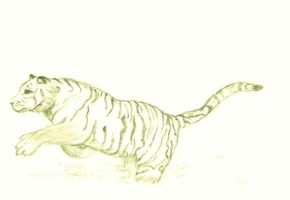 Tiger (pt 1) by Animal-Amans