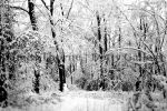 Local Narnia by DottyGallery