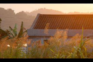 Sunset with Reeds by johnchan