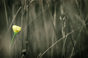 A Lonely Flower .color. by Lukasz337