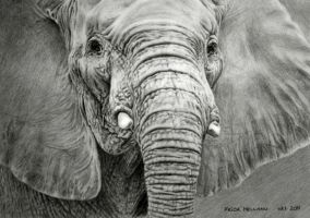 Elephant Drawing by dampStamp