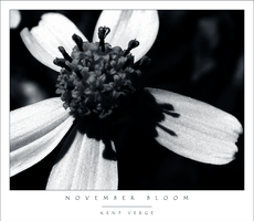 November Bloom by wulfster