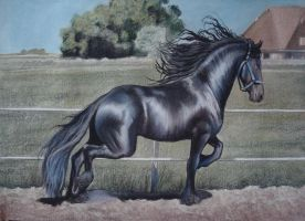 Horse Black Friesian Model by PASTELIZATOR