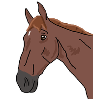Chestnut Horse Profile by jackiehorse