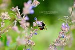 Be A Bee by Sophie-Wieland