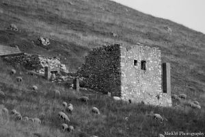 Sheeps house by Mirli38