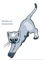 Rainface of ShadowClan by CometStre