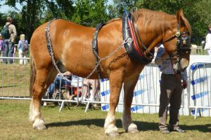 Suffolk Punch 3 by Psychedelic1993