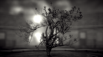 The Vertical Chamber Apparatus - 1 by Me864