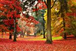 Autumn In Portland by signalfade
