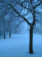 Walnut tree in snow by DZ1