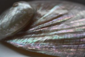 shell by SophieClare