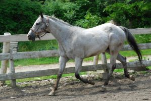Appaloosa 96 by Spotstock