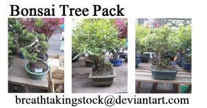 Bonsai Tree Stock by breathtakingstock
