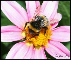 bumble bee v4 by simoner