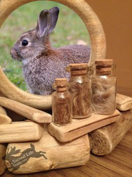 Rabbit fur-bottle FOR SALE *Ethically sourced* by SecondLifeTaxidermy