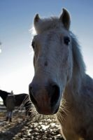 Close up horse IIII by Dodephine