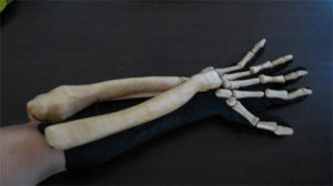 Bone Daddy Glove by TheMightyPegasus
